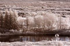 红外河 库存图片