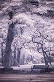 红外照片风景庭院树和草 库存照片