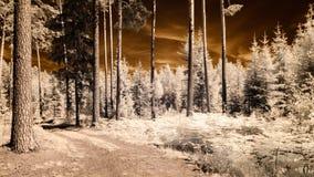 红外照相机图象 森林视图 免版税库存图片
