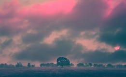红外线风景 免版税库存图片