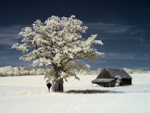 红外结构树 图库摄影
