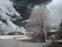 红外orava风景 免版税图库摄影