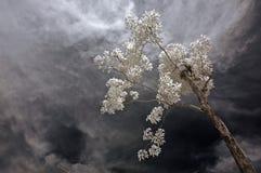 红外pa照片工厂天空结构树 库存图片