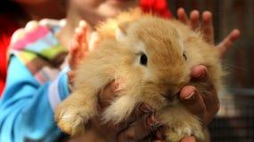红头发人兔子在动物园里 免版税图库摄影