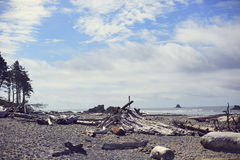 红宝石海滩漂流木头,华盛顿 库存照片