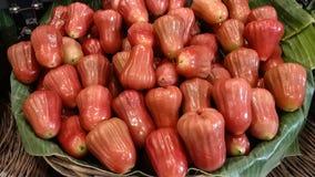 红宝石蒲桃在泰国 图库摄影