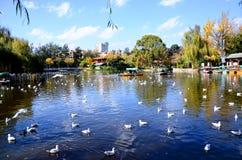 红开帐单的鸥在湖 库存图片