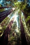 红木国家公园在加利福尼亚,美国 免版税库存照片