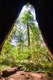 红木国家公园 库存照片