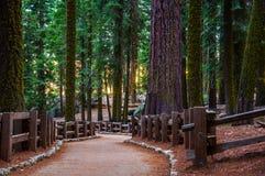 红木足迹在美国加州红杉公园 免版税库存照片
