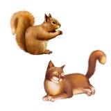 红松鼠,寻常的中型松鼠,吃,侧视图 免版税库存图片