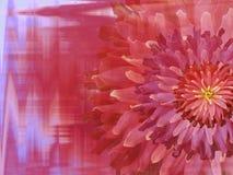 红桃红色秋天花,在红色桃红色马赛克背景 免版税库存照片