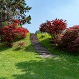 红槭台阶 免版税库存图片