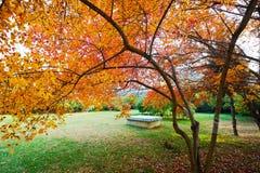 红槭叶子和绿色草坪 免版税图库摄影