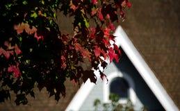 红槭叶子在雷德蒙德市中心 库存图片