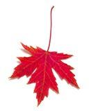 红槭叶子 图库摄影