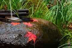红槭在tsukubai水盆离开在寺庙的秋天期间在日本 免版税库存照片