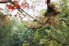红槭树和绿色一般树,它做一个好看法 免版税库存图片