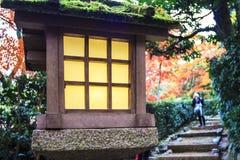 红槭树在日本庭院里 库存图片