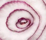 红洋葱切片横断面,宏观背景特写镜头 库存照片