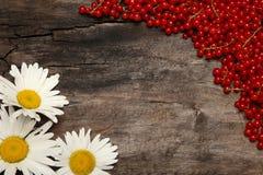 红浆果和春黄菊在老木背景 免版税图库摄影