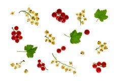 红浆果和白色无核小葡萄干在白色背景 库存照片
