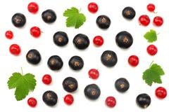 红浆果和黑醋栗的混合与在白色背景隔绝的绿色叶子 健康的食物 顶视图 库存图片
