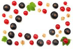 红浆果和黑醋栗的混合与在白色背景隔绝的绿色叶子 健康的食物 顶视图 库存照片