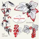红浆果和黑莓 免版税库存照片
