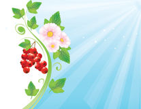 红浆果背景 免版税库存照片