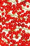 红浆果莓果。 图库摄影
