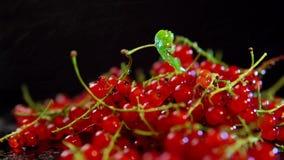 红浆果莓果转动反对黑背景 影视素材