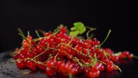 红浆果莓果转动反对黑背景 股票视频