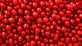 红浆果,醋栗rubrum 库存照片