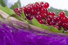 红浆果 免版税库存照片