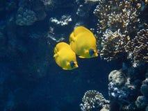 红海展示 免版税库存图片