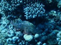 红海展示 库存图片