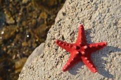 红海星形 库存照片