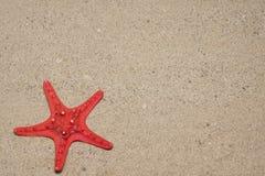 红海星形 免版税库存照片