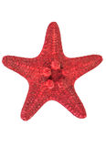 红海星形 图库摄影