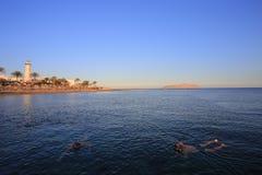 红海海岸 免版税库存照片