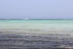 红海海滩红海埃及 免版税库存图片