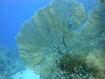 红海的五颜六色的水下的世界 库存图片