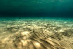 红海的壮观的水下的世界 免版税库存图片