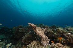 红海的壮观的水下的世界 免版税图库摄影