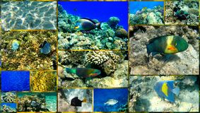 红海的水下的世界。 拼贴画。 库存图片