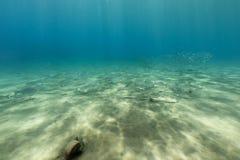 红海的水下的风景 免版税库存图片
