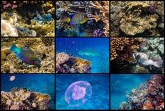 红海礁石生活 库存图片