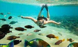 红海snorkeler 免版税库存照片