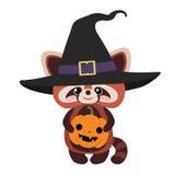 红熊猫06 免版税库存图片